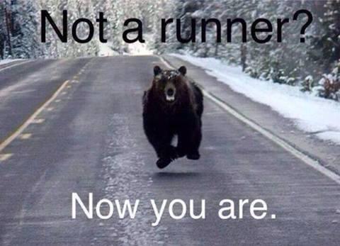 run from the bear